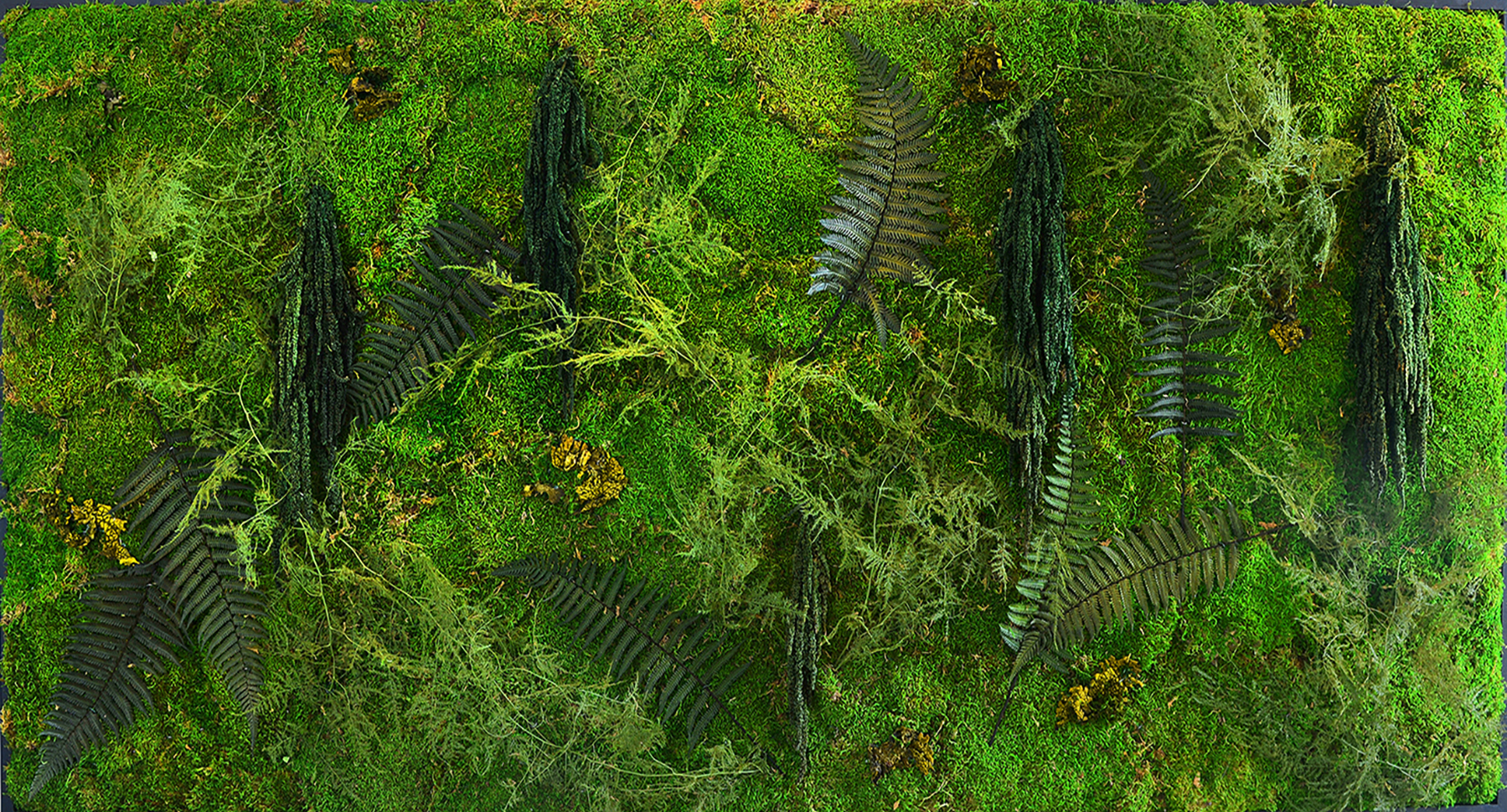 MossWallArt Pieces For Sale Online Best Living Artwork Home