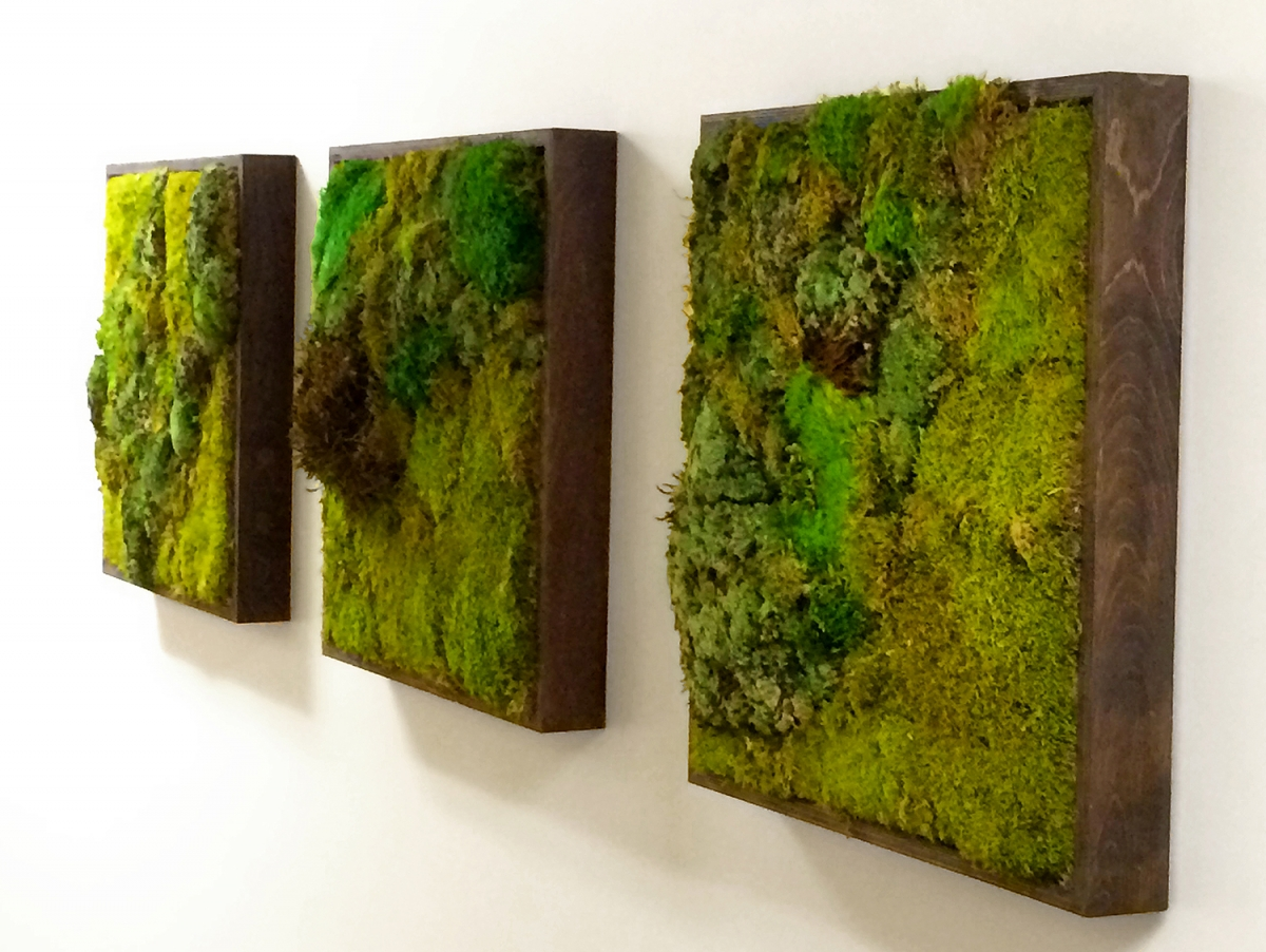 moss wall art by plant solutions a living wall designer. Black Bedroom Furniture Sets. Home Design Ideas