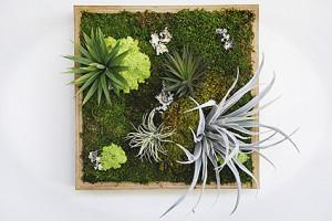 Artisan Moss