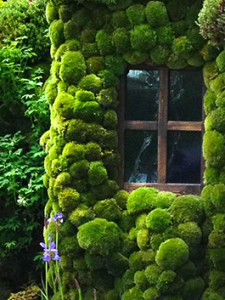 Artisan Moss Wall Art
